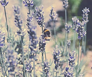 bee, flowers, and lavender image