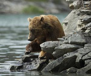 animals, bear, and nature image