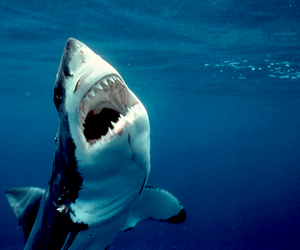 shark, ocean, and water image