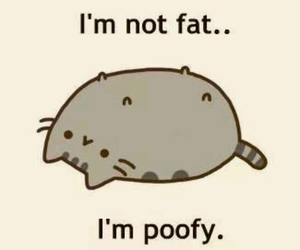 cat, poofy, and fat image