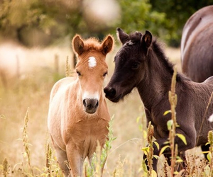 babies, horses, and love image