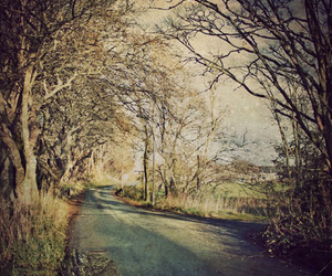 trees and road image