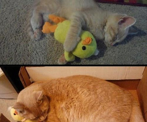 cat, duck, and funny image