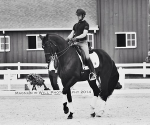 black and white, dressage, and equestrian image