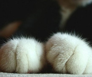 cat, cute, and paws image