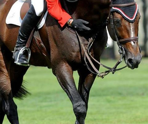 horse and hickstead image