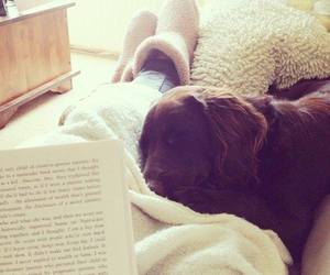 dog, book, and cozy image