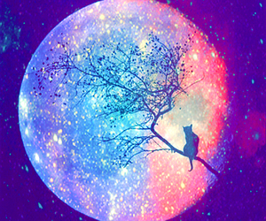 moon, cat, and tree image