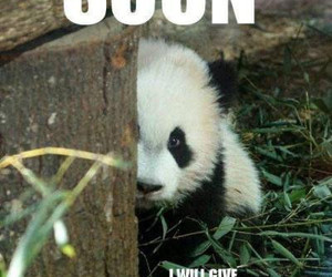 panda, cuddle, and funny image