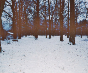 winter. and snow. image