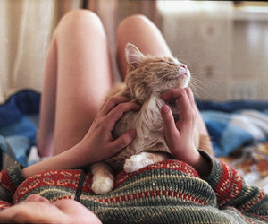 cat, cute, and girl image