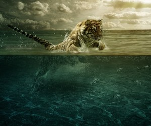 tiger, water, and sea image