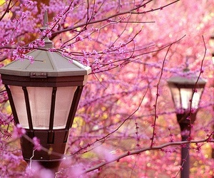 pink, flowers, and tree image