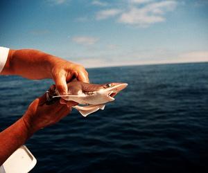 boat, sea, and shark image