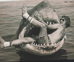 shark, jaw, and steven spielberg image