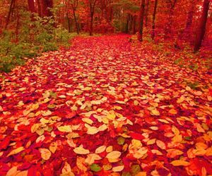 amarillo, rojo, and feuilles image