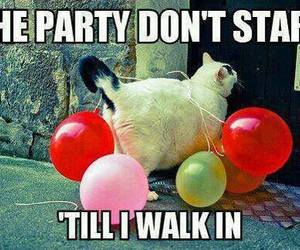 cat, party, and balloons image