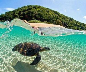 beach, oceans, and turtles image