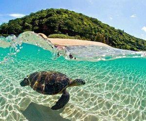 beach, hawaii, and turtles image
