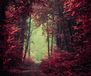 forest, beautiful, and tree image