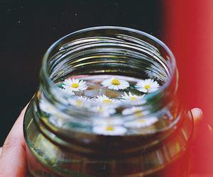 flowers, water, and daisy image