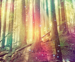 amazing, beautiful, and forest image