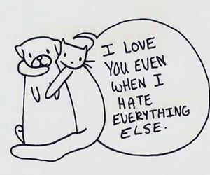 love, cat, and quote image