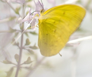 butterfly, yellow, and bright image