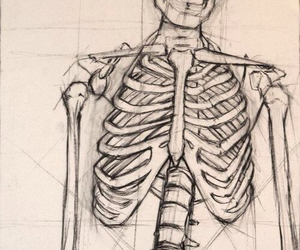 drawing and skeleton image
