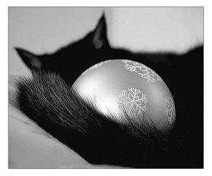 black, cat, and xmas image