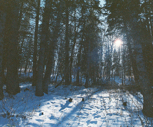 forest, photography, and snow image