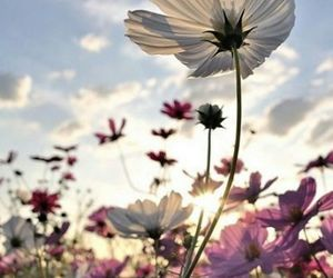flowers, photographie, and pink image