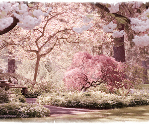 flowers, garden, and flowering trees image