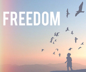 birds, free, and freedom image