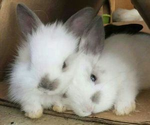 bunny, rabbit, and pet image