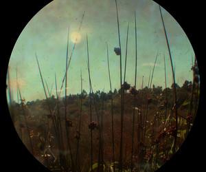 crystal, field, and fisheye image