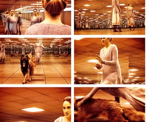 divergent, beatrice, and dog image