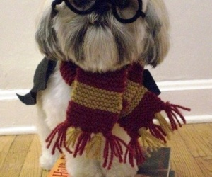 harry potter, dog, and puppy image