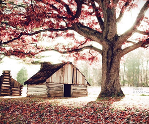 tree, house, and nature image
