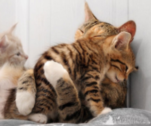 cat, cute, and hug image