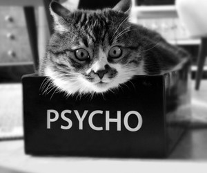 cat, Psycho, and animal image