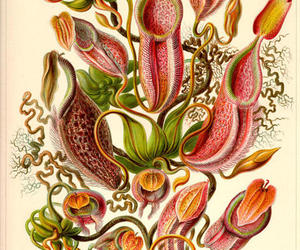 flowers, illustration, and ernst haeckel image