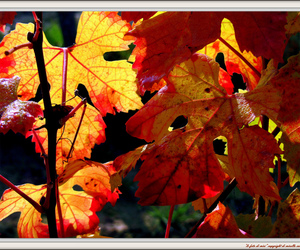 autumn, bird, and colors image