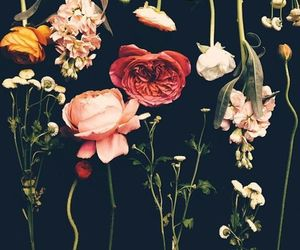 flowers, rose, and black image