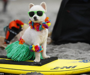 beach, sunglasses, and dog image