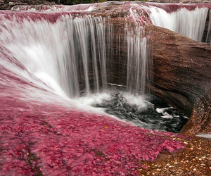 waterfall, pink, and nature image