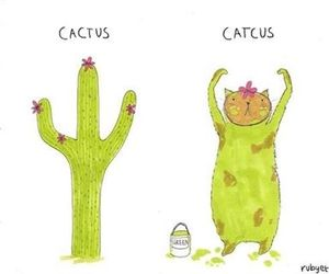 cat, cactus, and funny image