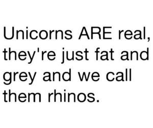 unicorn, rhino, and real image