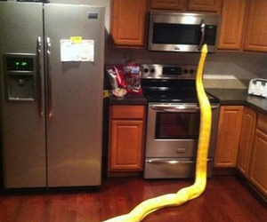 funny, snake, and lol image