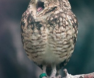 bird, lovely, and owl image